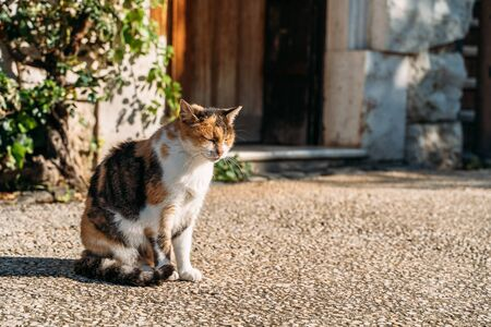 Cute cat squinting and basking in sunlight in rural landscape. Stok Fotoğraf