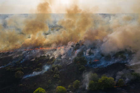 Forest fire, trees burning in dry season. Nature in smoke, wildfire aerial view from drone. Stock Photo