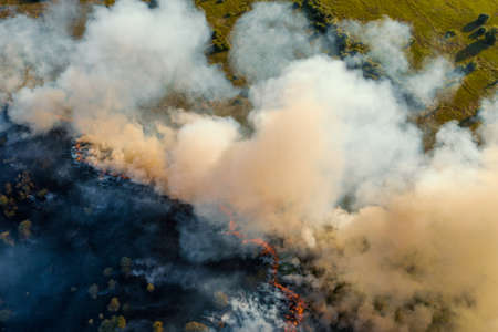 Forest fire in dry season. Smoke from burning grass and trees, aerial top view.