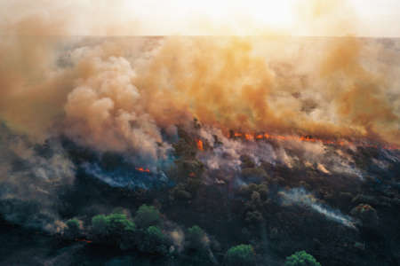 Aerial drone view of fire or wildfire in forest with huge smoke clouds, burning dry trees and grass.