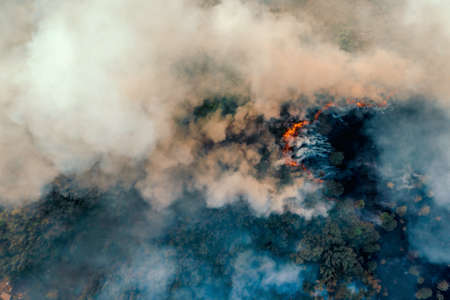 Fire in forest, burning trees and grass with smoke, aerial top view from drone. Natural fire or wildfire.