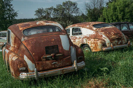 Rusty abandoned vintage cars on green nature landscape.