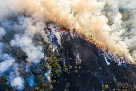 Forest fire aerial view, wildfire after dry summer season, burning nature. 版權商用圖片