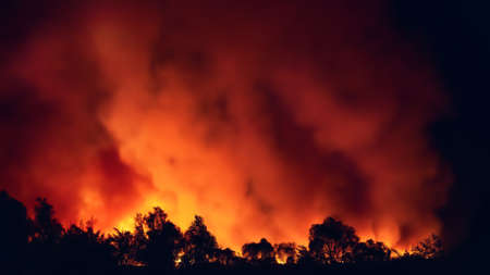 Panorama of forest fire at night, wildfire after dry summer season, burning nature.