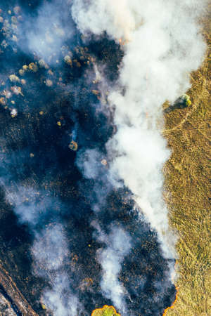 Forest fire, burning dry grass and trees, natural disaster, aerial view, vertical image.