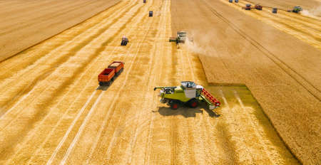 Combine harvesters gathers wheat on yellow grain field, aerial view. Imagens