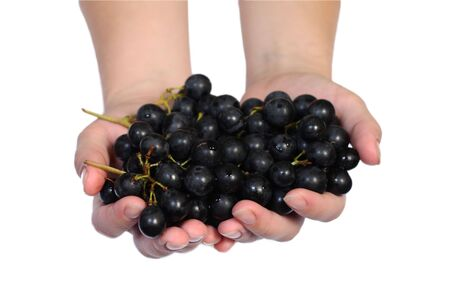 Grape vine in a human hands isolated on the white