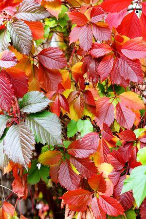 Colorate leafs in un parco a stagione autunnale Archivio Fotografico