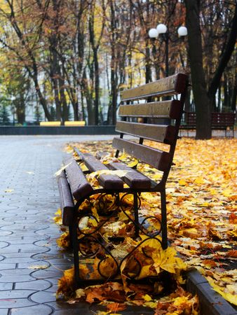 Empty bench in a autumn park with yellow leafs