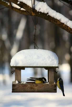 Two titmouses near the feeder in a winter park