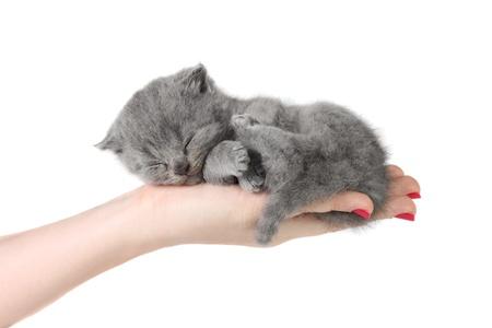 Piccolo gattino dormire nelle mani a sfondo bianco Archivio Fotografico