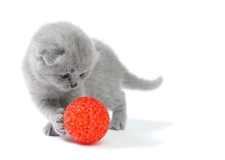 gato jugando: Gatito poco jugando con la pelota en fondo blanco