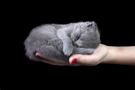 Little kitten sleeping in the hands at dark background Stock Photo