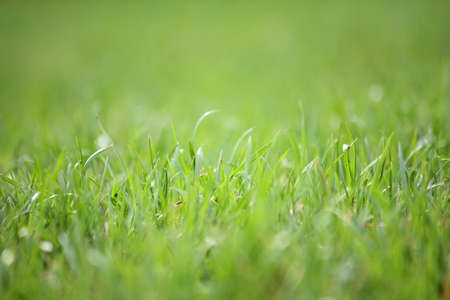 Macro photo of a green grass photo