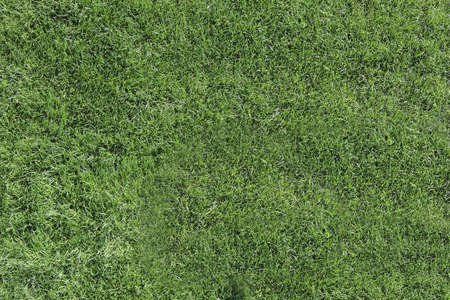 Up view of a green lawn Stock Photo
