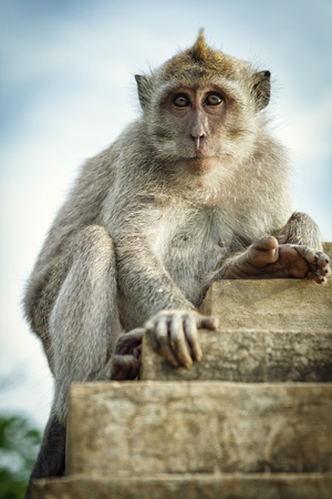 Monkey on the wall Stock Photo - 18735063