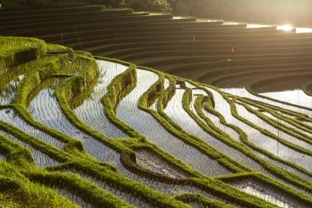 gradas: Campos de arroz verde, el cielo con nubes y reflejos en el agua
