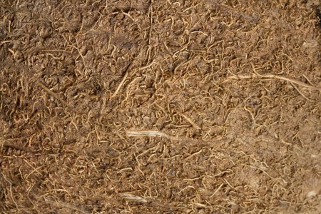 The texture of brown coconut fibers with high-resolution Stock Photo