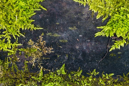 Frame made of wood and green moss in high resolution photo