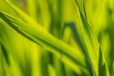 A beam of green grass up close in high resolution photo