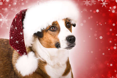 a cute dog with a christmas hat and snowflakes