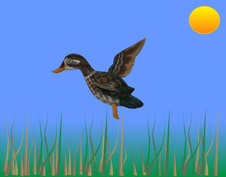 agachado: Ducking pr�ximos en el aterrizaje de un toro se apresura m�s de ilustraci�n Vectores