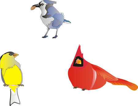 Blue Jay,  goldfinch and cardinal clip art isolated Vector