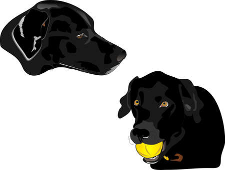 Illustration of Coal, and Panther, father and daughter , black Labrador retrievers. Companions and give unconditional love to its family. Working class water dogs Vector