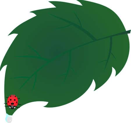 lady bug: Lady Bug h�ngen Ende des Blattes, zu versuchen, einen Drink aus der Tropfen am Ende des Blattes ... Illustration