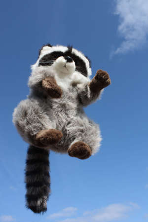 Ricky the Raccoon, jumped into the air for fun....
