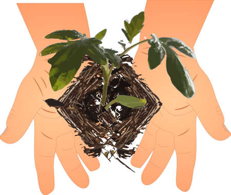 hands holding plant: small hands holding a seedling.. ready to plant in mother earth, new beginnings!