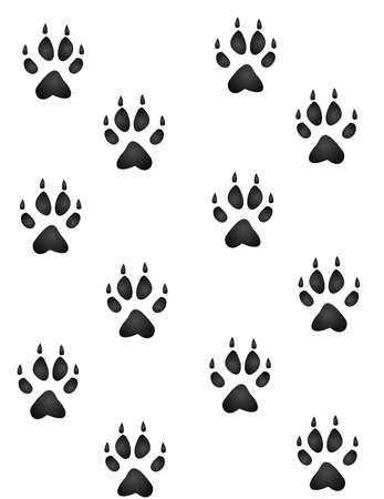 animal tracks: Wolf, fox or coyote, paw prints all heading in an upward direction wallpaper