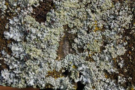 esporas: Texturados de esporas de moho, creado por los elementos del clima.