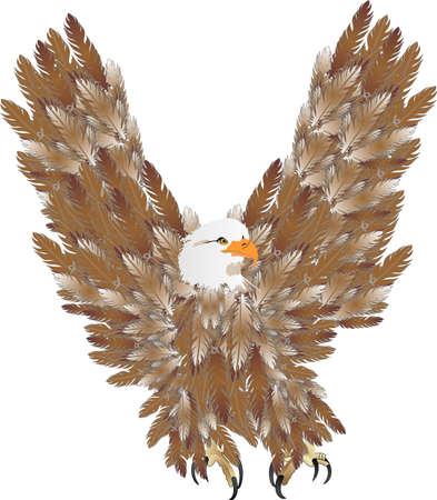 aigle royal: Eagle envol�e au-dessus, � la recherche d'une proie � manger ...