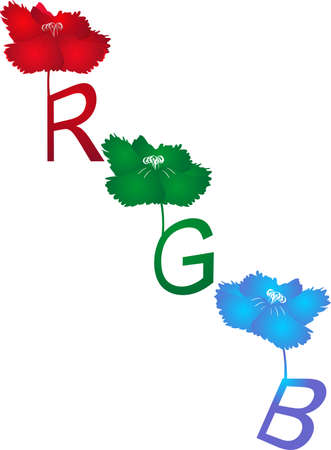 The beauty in colours, represented in floral designs, RGB, is mainly for  representation, and display of images in electronic systems and conventional photography.. Vector