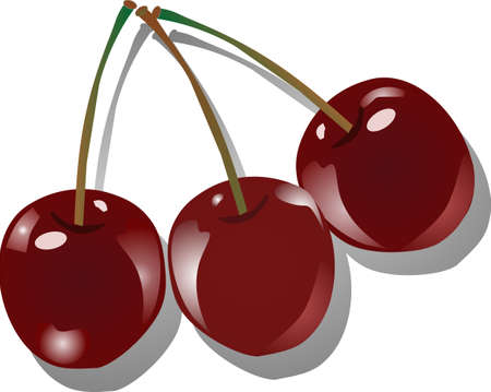 drupe: three succulent cherries in an illustration