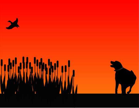 perro labrador: Scarying de retreiver de Labrador a un pato de las fiebres de Toro.  Vectores