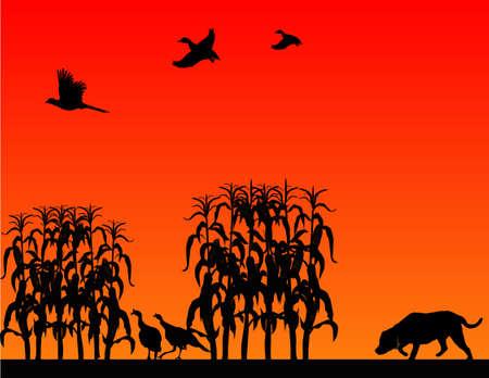야생 칠면조, 꿩 및 오리를위한 사냥, 래브라도 리트리버가있는 옥수수 밭에서 ..