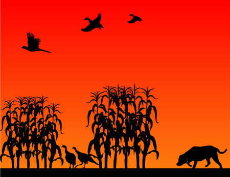 Hunting for wild turkeys, pheasants and ducks, in a corn field with the Labrador Retriever.. Vector