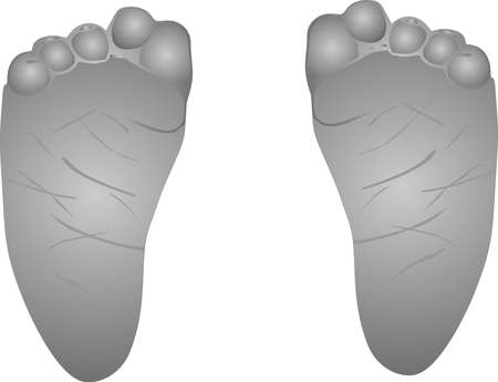 Illustration of babies feet, small with curled in toes.. Vector