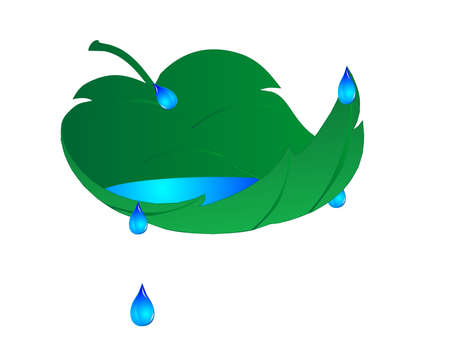 rain drop: a single leaf, with water in it, and droplets flowing off of it, over a white background.