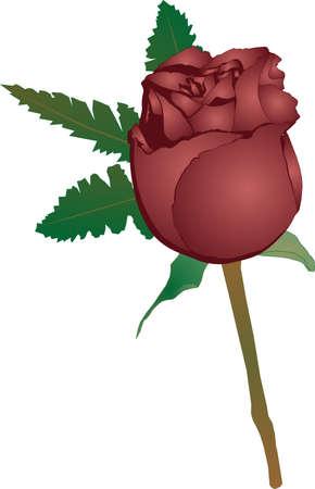 単一の赤いバラは、シンプルなデザインが、絶妙な。それを飾るシダの可憐な部分との友情の意味です。