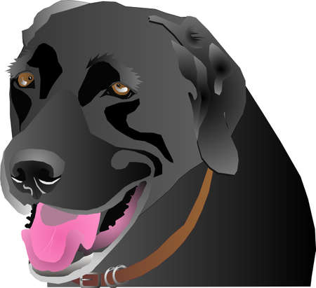 labrador retriever: Black Labrador head profile, over white and isolated for many usages.