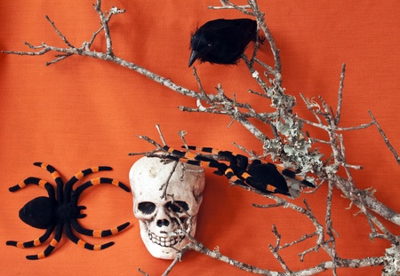 eye socket: Raven and skull with tarantulas and a dead branch on an orange background Stock Photo
