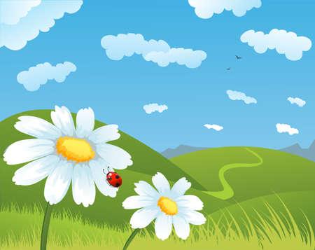 daisy vector: Summer daisies