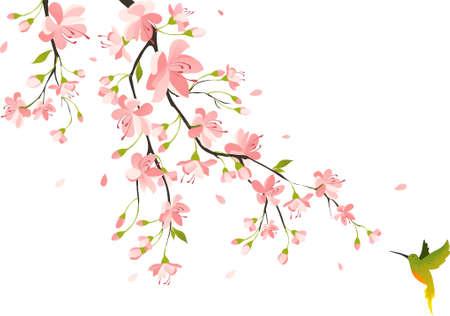 flor de cerezo: Los cerezos en flor