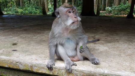 Monkey waiting for food in Balinesian Temple Ubud