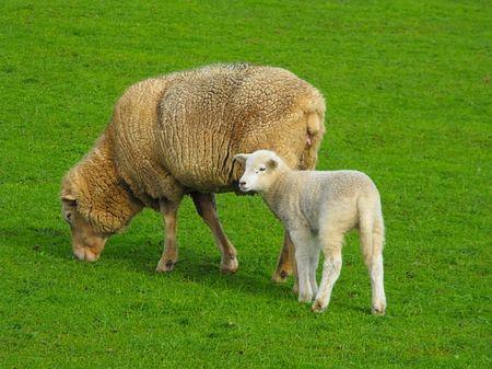 New Lamb 4
