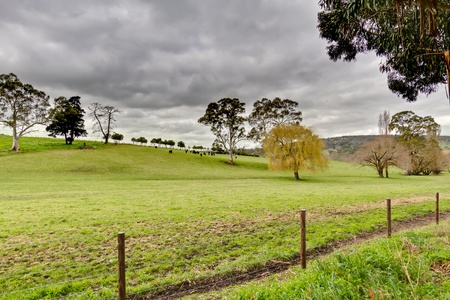 Green Field of Adelaide Hills, South Australia.