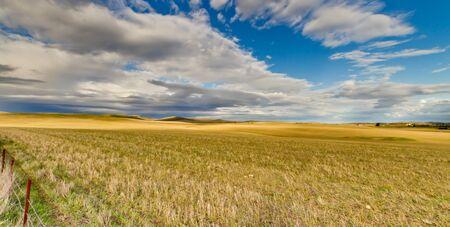 australia farm: Wheatfield South Australia.